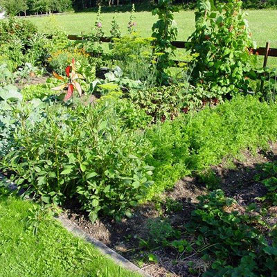 allotment in full growth