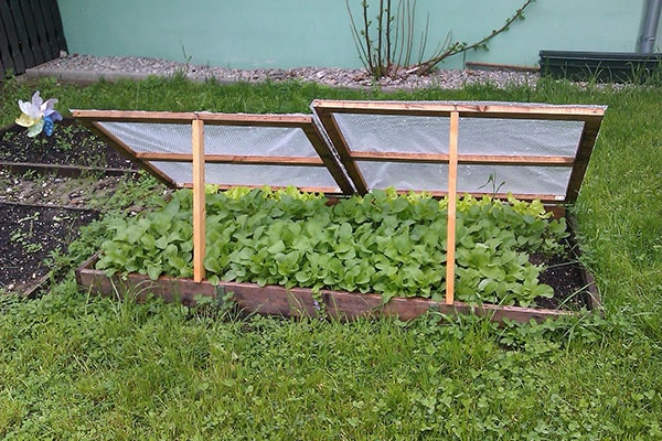 a cold frame with the lids propped open