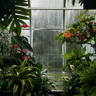 an assortment of plants in a greenhouse