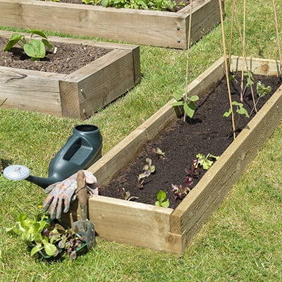 long wooden raised bed for allotments and gardens