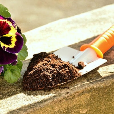 potting soil on a trowel and a pansy