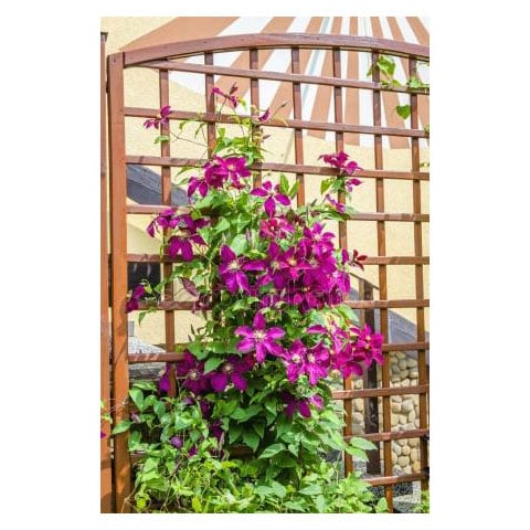 Different Uses for Trellis