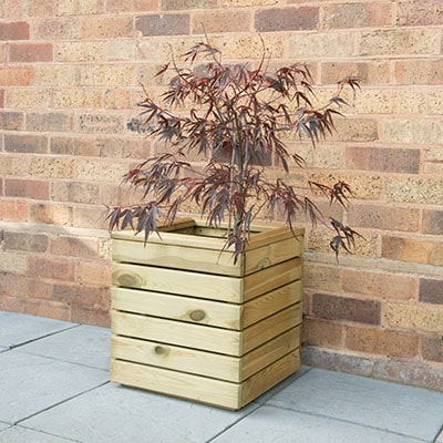 A square wooden planter with acer tree