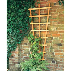 Decorative wall trellis with a green plant climbing it.