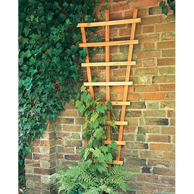 A decorative fan wall trellis and a green climbing plant