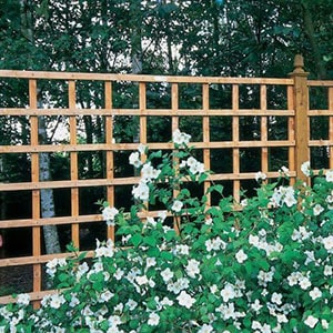A 6x6 heavy-duty, square trellis fence panel, with white flowers in the foreground.