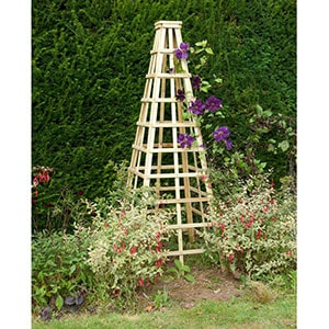 A wooden garden obelisk with purple flowers growing up its trellis sides.