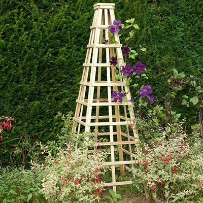 A wooden garden obelisk with purple flowers climbing up trellis sides