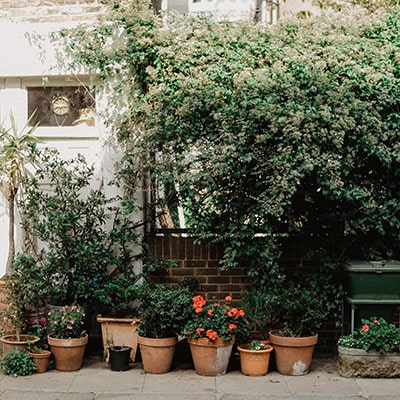 Plants in round containers, situated on a patio, next to a wall