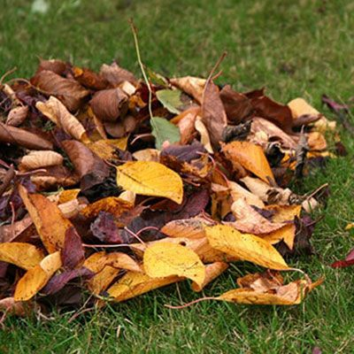an assortment of dried leaves on a lawn