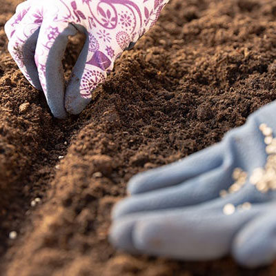 A pair of gloved hands sowing some seeds