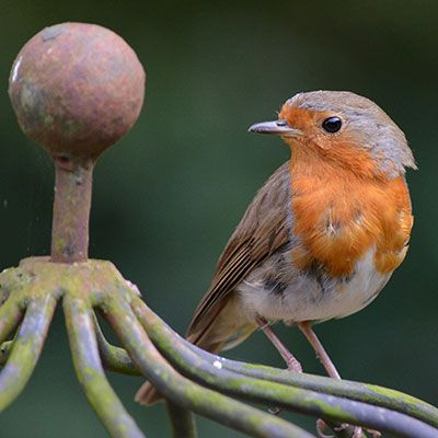 a robin sat on the top of a metal bird box