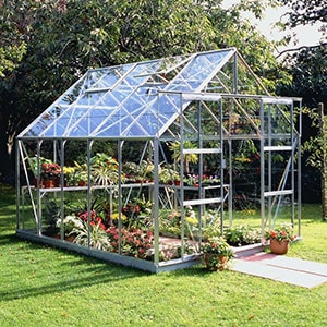 A silver-framed greenhouse, full of plants, positioned on a lawn, with paving slabs in front of the doors.