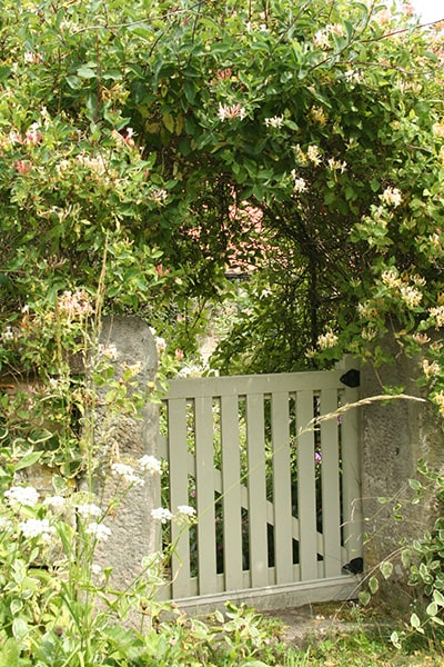 honeysuckle climbing an arch over a gate