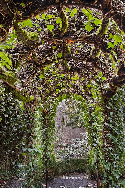 Garden path covered by an ivy arch