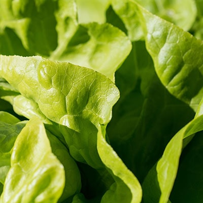 a close-up of a lettuce
