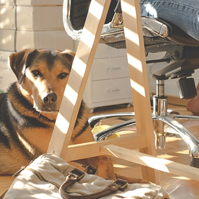 dog at the feet of a person working from home in an office chair