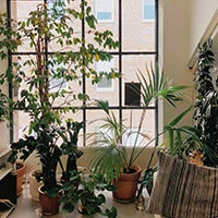 A variety of houseplants next to a first floor window.