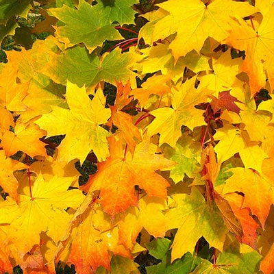 yellow, green and orange leaves on the ground