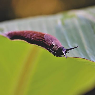 a slug on a leaf
