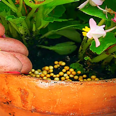 a person putting plant food in a pot containing small pink flowers