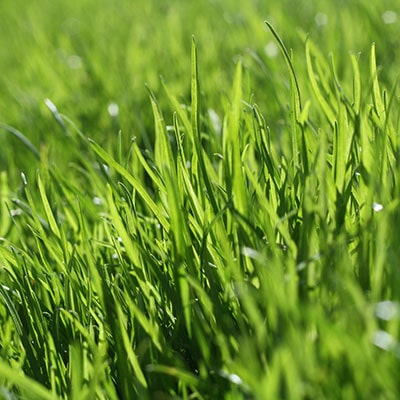 a close up of a lawn