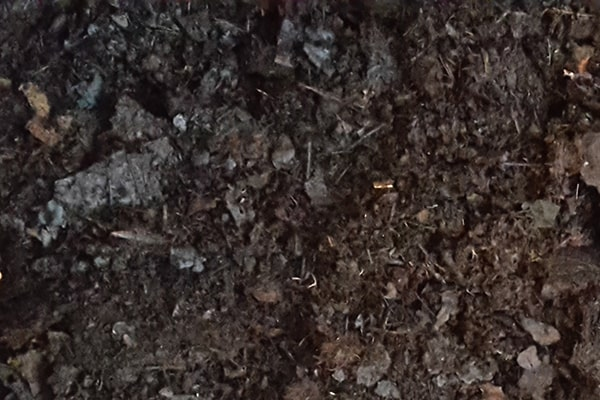 close up of leafmould