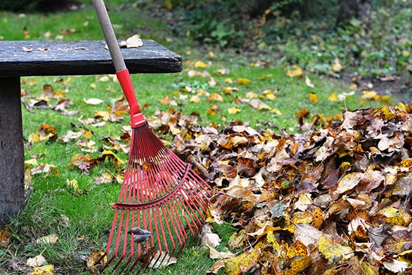 autumn leaves with a rake and bench