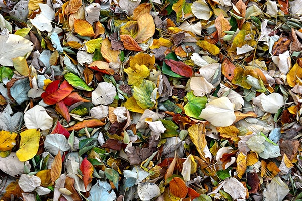 pile of multi-coloured leaves