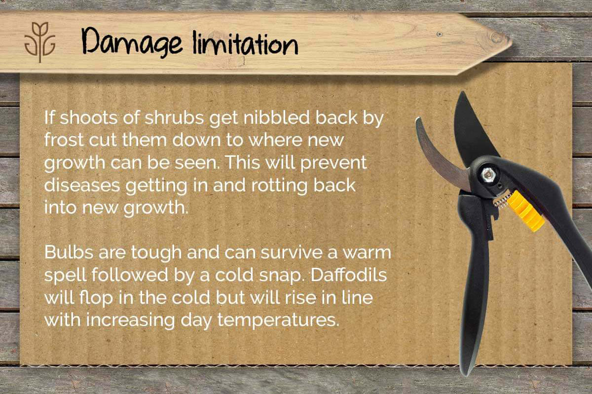 How to protect my garden from frost and ice infographic